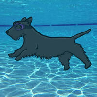 Scottie Swim Lessons
