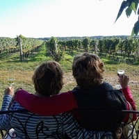 Cool Climate Wines of Niagara from Toronto