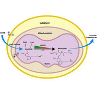 Aim32 is the new [2Fe-2S] protein that facilitates mitochnodrial redox quality control