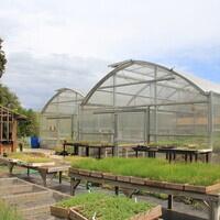 POSTPONED: Organic Seedling Production Field Day / Producción Orgánica de Plántulas: Taller en Campo