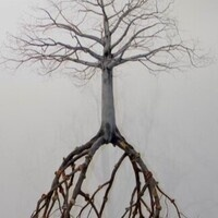 A bare tree with roots.