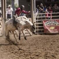 Deadwood PBR