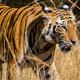Canceled: Wildlife Conservation Film Festival