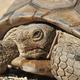Boyd: Desert Habitat Restoration