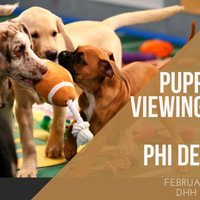 Puppy Bowl Viewing Party Rush