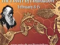 Darwin's Cabaret with Dr. Anurag Agrawal: Pollination and Coevolution: Love Story or Arms Race?