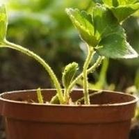Get Growin' Gardening Program