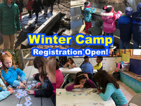 Schools Out! - Winter Camp