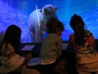 Vanderbilt Museum Workshops for Children - Winter Break 2020