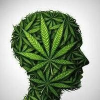 The Science of Cannabis and the Brain