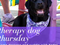 Therapy Dog Thursday
