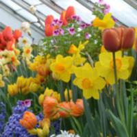 Flowers in the Talcott Greenhouse