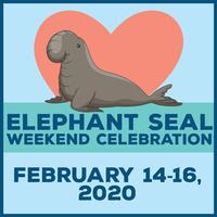 Elephant Seal Weekend Celebration