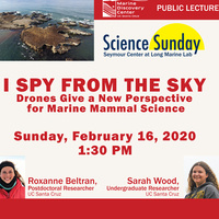 Science Sunday - I Spy in the Sky: Drones Give a New Perspective for Marine Mammal Science