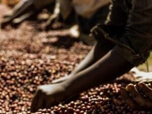 Global Brew: Africa
