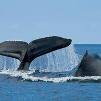 San Diego Whale Watching Trip