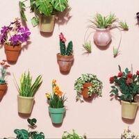 Plant Sale Part 2