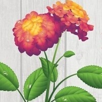 Postponed: Annual Plant Sale
