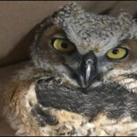 Canceled -- Wildlife Rescue Training Weekend