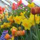 Botanic Garden Plant Sale