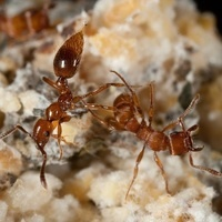 Biology Seminar: ''Predators, Parasites, and Protective Symbionts''