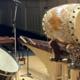 Oregon Percussion Ensemble