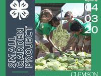 4-H Small Garden Project