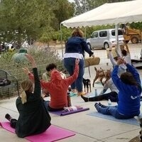 CANCELED - Goat Yoga at the Farm!
