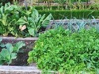 Make Your Veggie Garden Beautiful