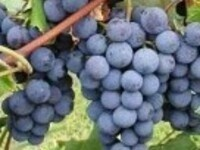 2020 LERGP Winter Grape Growers' Conference