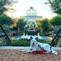 Dog and the conservatory