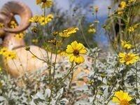 Wildflower Workshop, morning