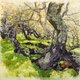 Oak Branches at Wilder