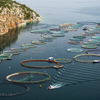 Aquaculture: Dominating Seafood Supply by 2040