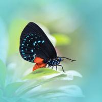 *Postponed* Wings of Fancy Live Butterfly & Caterpillar Exhibit