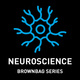 Sex-Specific Opioid Plasticity in Prefrontal-Accumbens Circuits: Implications for Impaired Cognitive Control - Neuroscience Seminar Series