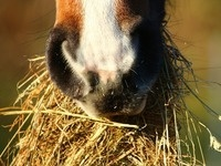 Understanding the Keys to Horse Quality Hay
