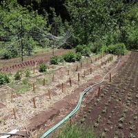 CANCELED: Irrigation Basics