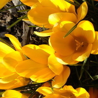 CANCELED: March to the Garden with Delaware Master Gardeners
