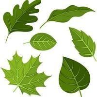 CANCELED - Young Scientist (Leaf Studies)