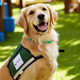 Pause for Paws: Therapy Dogs