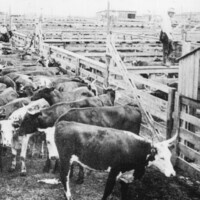 CANCELED: Wall Street of the West: How Fort Worth Became the Livestock Center of the Southwest