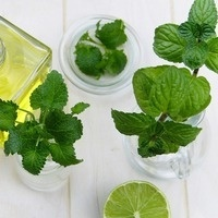 Grow Your Own Mint Plant