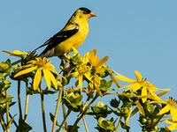 CANCELLED: Bird Walk in the Arboretum