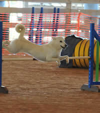 Canaan Dog Club of America All Breed Agility Trial