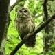 Canceled -- Owl Prowl