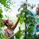 Planting the Beanstalk