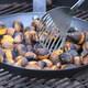 Virtual Missouri Chestnut Roast