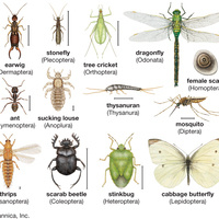 Silver Sciences: Investigating Insects