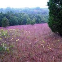 Friends of the State Line Serpentine Barrens: Stewardship Day